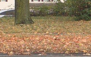 Get Rid of Leaves