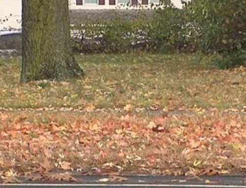 How To Get Rid of Leaves Without Raking?