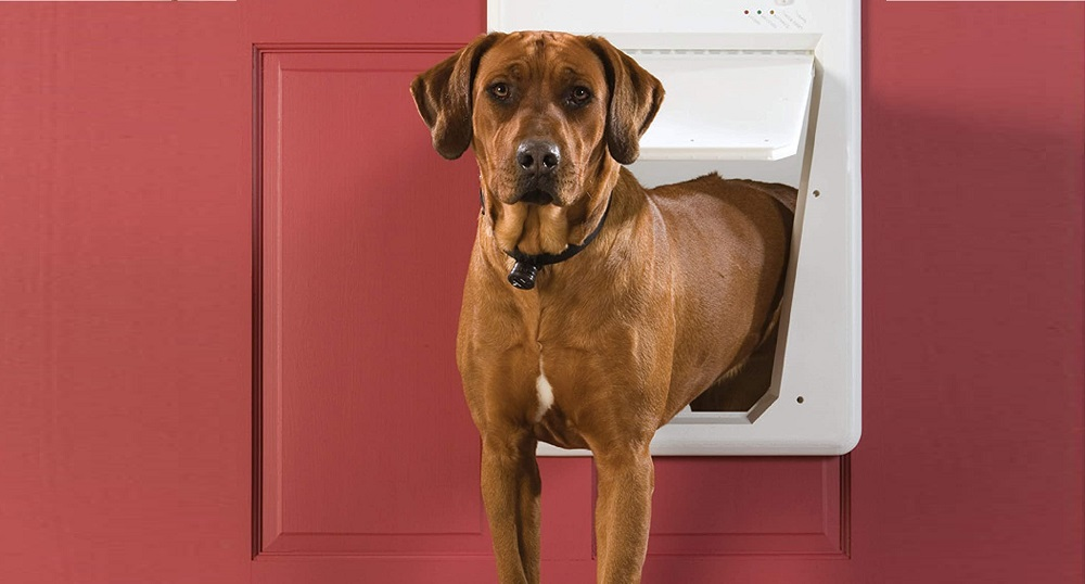 pet smart dog doors