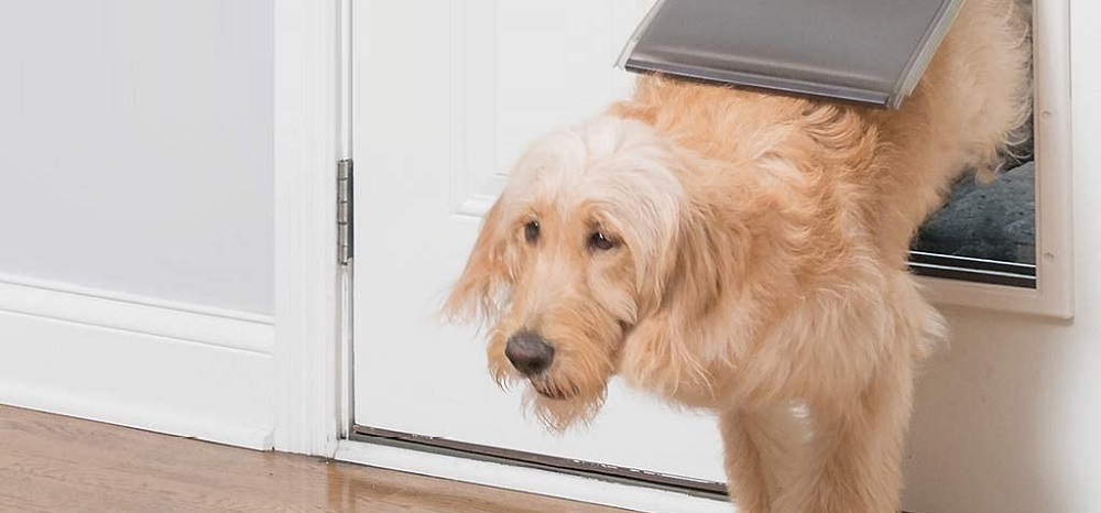 pet smart doggie doors