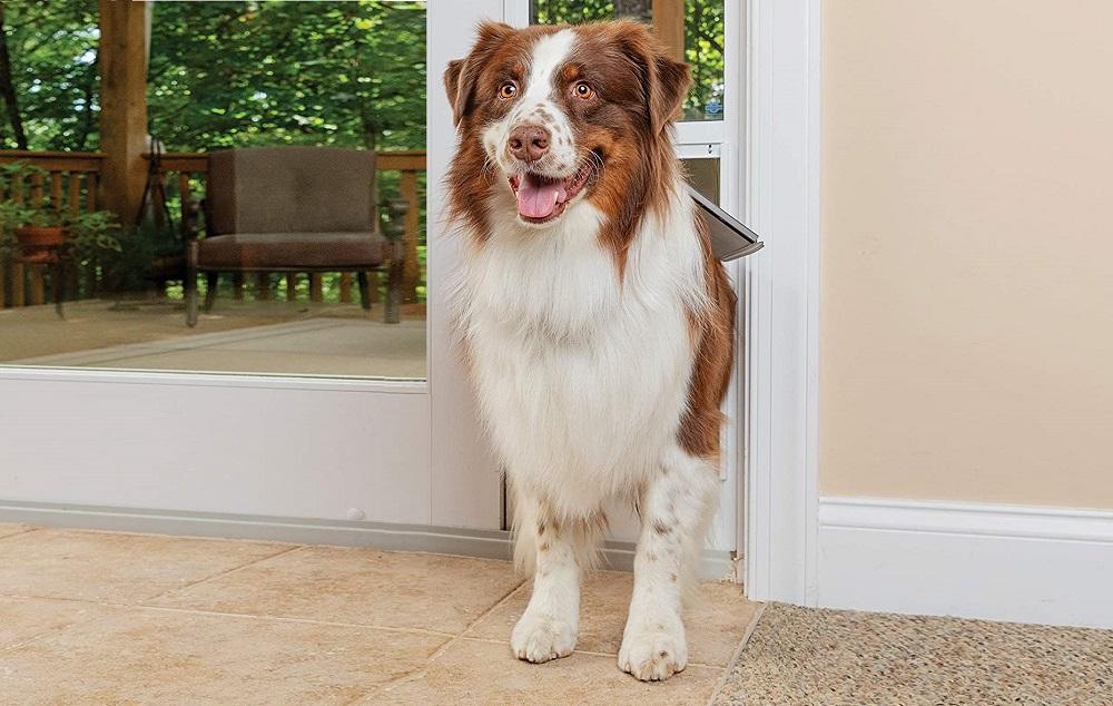 smart pet doors